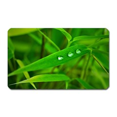 Bamboo Leaf With Drops Magnet (Rectangular)