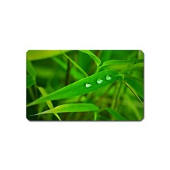 Bamboo Leaf With Drops Magnet (Name Card)