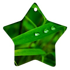 Bamboo Leaf With Drops Star Ornament (Two Sides)