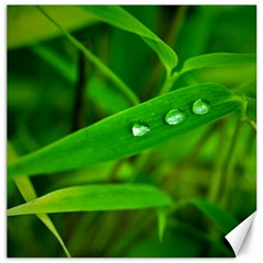 Bamboo Leaf With Drops Canvas 12  x 12  (Unframed)