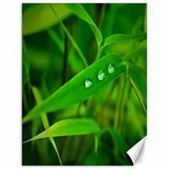 Bamboo Leaf With Drops Canvas 12  x 16  (Unframed)