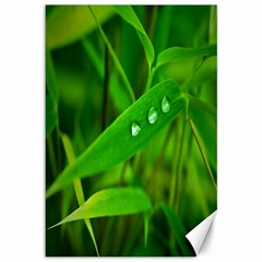 Bamboo Leaf With Drops Canvas 12  x 18  (Unframed)