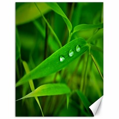 Bamboo Leaf With Drops Canvas 18  X 24  (unframed)
