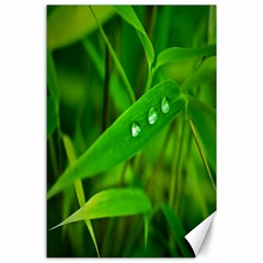 Bamboo Leaf With Drops Canvas 24  x 36  (Unframed)