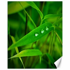 Bamboo Leaf With Drops Canvas 11  x 14  (Unframed)