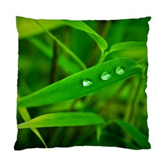 Bamboo Leaf With Drops Cushion Case (Single Sided)