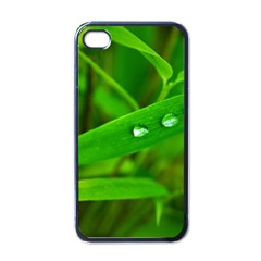 Bamboo Leaf With Drops Apple Iphone 4 Case (black)