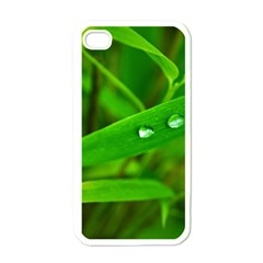 Bamboo Leaf With Drops Apple iPhone 4 Case (White)