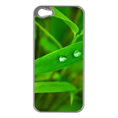 Bamboo Leaf With Drops Apple iPhone 5 Case (Silver)