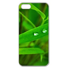 Bamboo Leaf With Drops Apple Seamless Iphone 5 Case (clear)