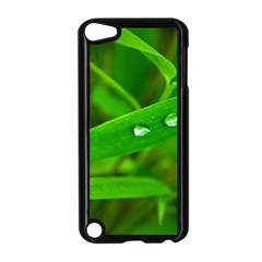 Bamboo Leaf With Drops Apple iPod Touch 5 Case (Black)