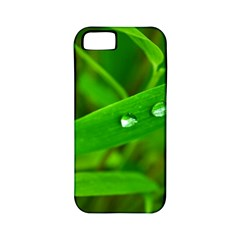 Bamboo Leaf With Drops Apple iPhone 5 Classic Hardshell Case (PC+Silicone)