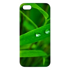 Bamboo Leaf With Drops Iphone 5s Premium Hardshell Case