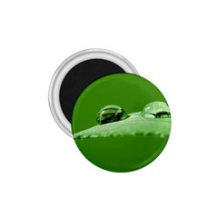 Waterdrops 1.75  Button Magnet