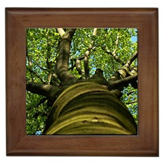 Tree Framed Ceramic Tile