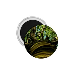 Tree 1 75  Button Magnet