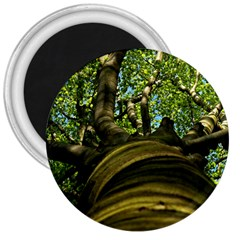Tree 3  Button Magnet