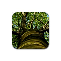 Tree Drink Coasters 4 Pack (Square)