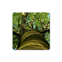 Tree Magnet (Square)