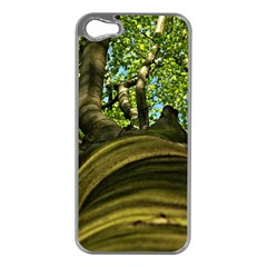 Tree Apple iPhone 5 Case (Silver)