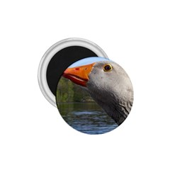 Geese 1.75  Button Magnet