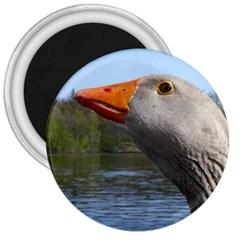 Geese 3  Button Magnet