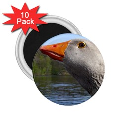 Geese 2.25  Button Magnet (10 pack)