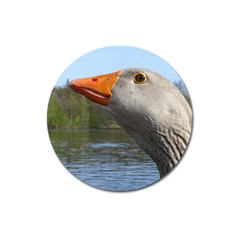 Geese Magnet 3  (Round)