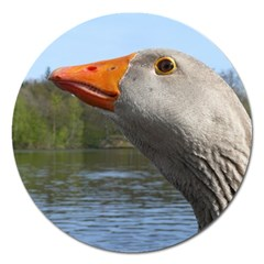 Geese Magnet 5  (round)