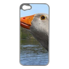 Geese Apple iPhone 5 Case (Silver)