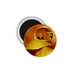Drops 1.75  Button Magnet