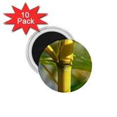 Bamboo 1.75  Button Magnet (10 pack)