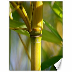 Bamboo Canvas 12  x 16  (Unframed)