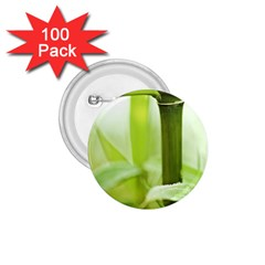 Bamboo 1.75  Button (100 pack)