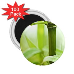Bamboo 2 25  Button Magnet (100 Pack)