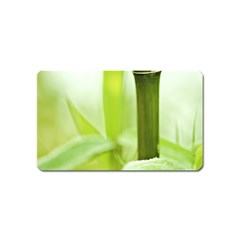 Bamboo Magnet (name Card)