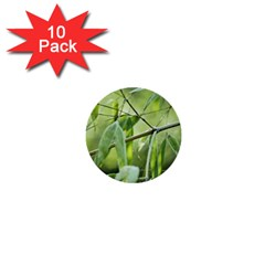 Bamboo 1  Mini Button (10 pack)