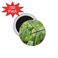 Bamboo 1 75  Button Magnet (100 Pack)