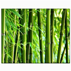 Bamboo Canvas 8  X 10  (unframed)