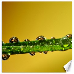 Drops Canvas 16  x 16  (Unframed)