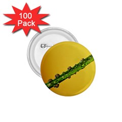 Drops 1 75  Button (100 Pack)