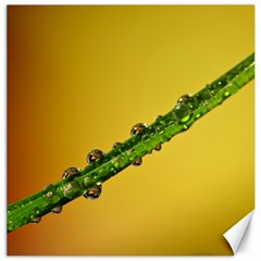 Drops Canvas 20  x 20  (Unframed)