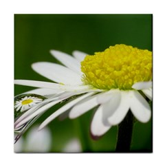 Daisy With Drops Ceramic Tile