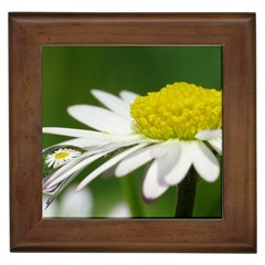 Daisy With Drops Framed Ceramic Tile