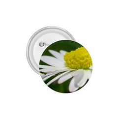 Daisy With Drops 1 75  Button
