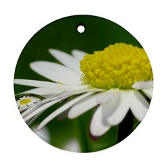 Daisy With Drops Round Ornament