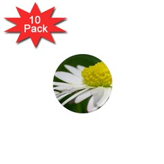 Daisy With Drops 1  Mini Button Magnet (10 pack)