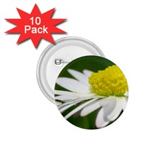 Daisy With Drops 1.75  Button (10 pack)