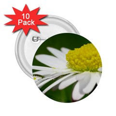 Daisy With Drops 2.25  Button (10 pack)