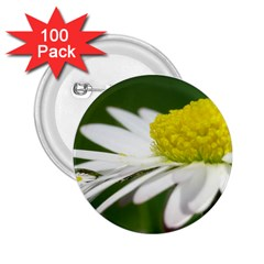 Daisy With Drops 2 25  Button (100 Pack)